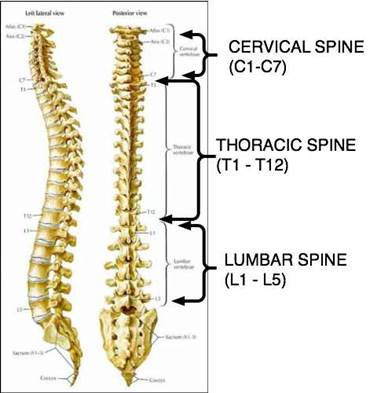 Upper Spine Diagram - Block And Schematic Diagrams •